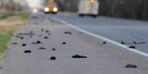MORE Birds suddenly DEAD: What's causing mystery illness in Ohio, Kentucky, Indiana?